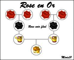 Les fleurs : Les Roses