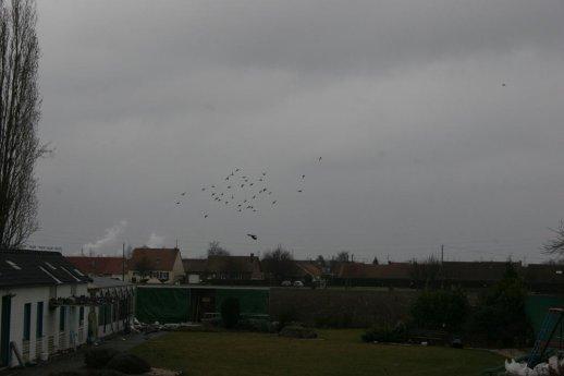 Le 18 Février les jeunes commençaient déja a voler en groupe