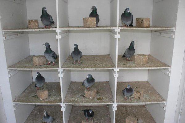 intérieur d'un pigeonnier de veufs