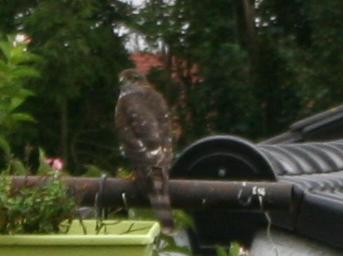 Le nouveau gardien de mes pigeonniers