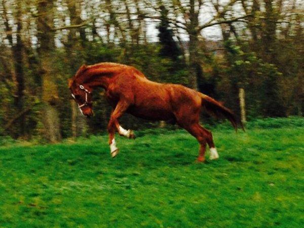 My horse !