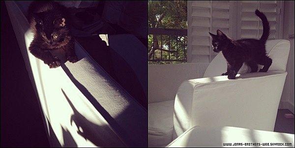 Le 15 Juin 2014 | Nick et John Taylor allant au restaurant Hugo's, L.A.