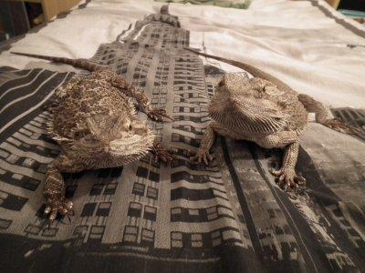 Krauser et Lola sur mon lit
