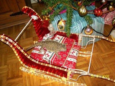 Lola la veille de Noël