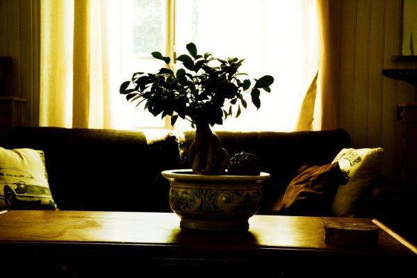 """""""L'homme est un bonsaï qui se prend pour un arbre."""""""