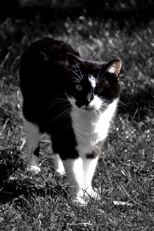 """""""Le chat semble mettre un point d'honneur à ne servir à rien, ce qui ne l'empêche pas de revendiquer au foyer une place meilleure que celle du chien."""" Michel Tournier"""
