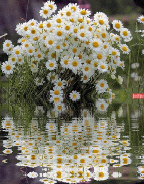 Nature en poème