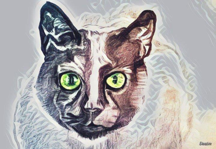 Le chat d'argent  (Silver Cat)