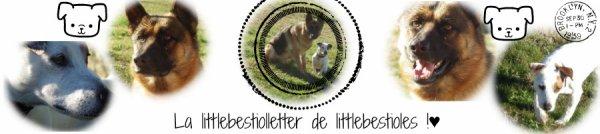 La littlebestiolletter  !♥