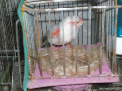 femlle mosaique rouge 2011