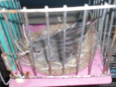 femlle alies grises 2011