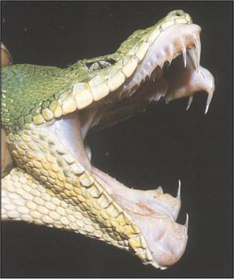 serpent dangereux