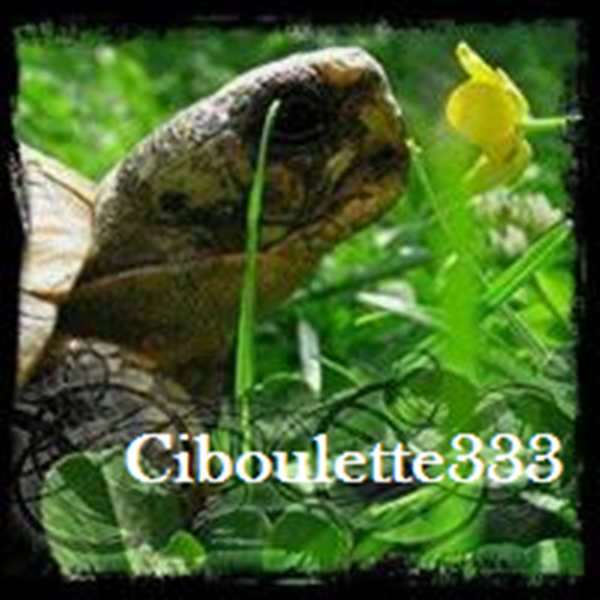 # Ciboulette333