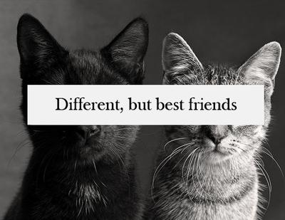 """""""Les vrais amis se comptent sur les doigts d'une seule main."""""""