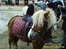 Photo de passiOn-equitatiOn-11