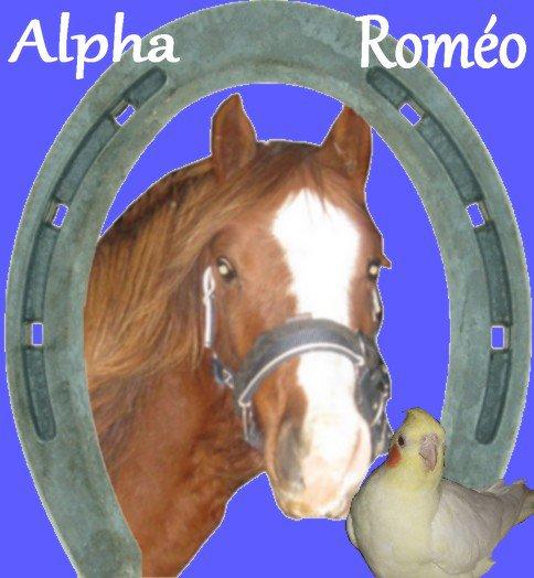 Alpha-Roméo