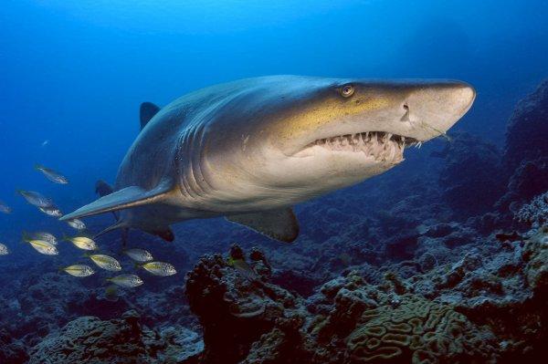Quel beau requin !!! (1/2)