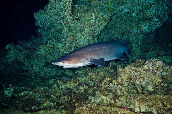 Quel beau requin !!! (2/2)