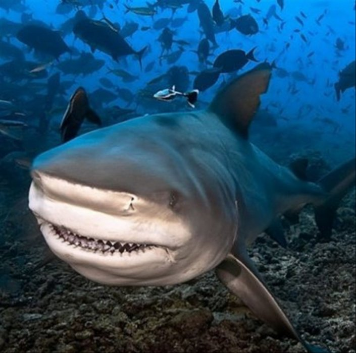 Blog de requin27200
