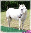 Photo de COoCOoURS--horse