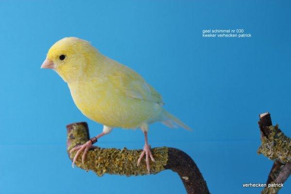 graag jullie mening over onderstaande foto's geel schimmel.  comme toi Gars avis sur les photos ci-dessous champignon jaune