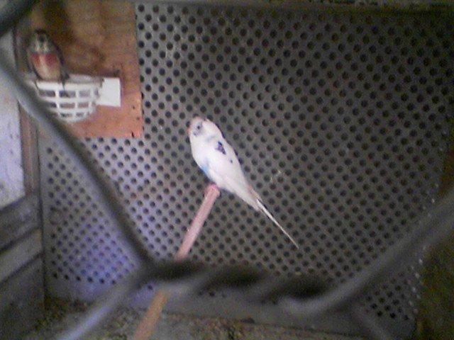 تربية الطيور بالقنيطرة