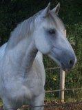 Photo de horse-riiding-x3