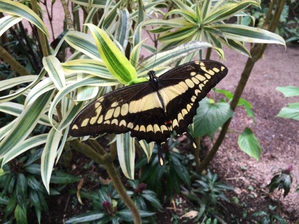 Visite de Naturospace Honfleur