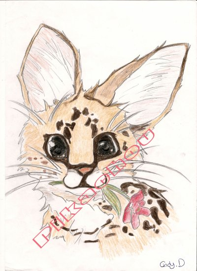 Serval!