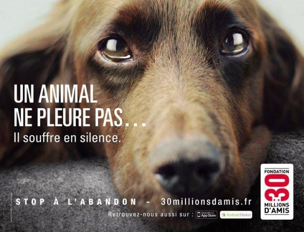 Un animal ne pleure pas... Il souffre en silence