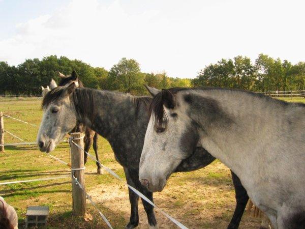 Des chevaux ♥