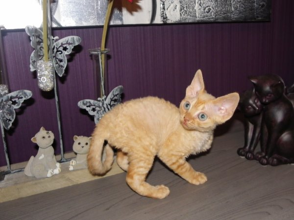Chatons Willma et Ulysse