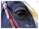 Photo de pony--paradise