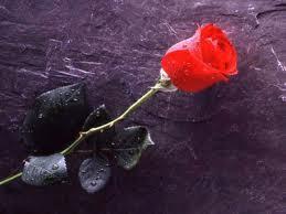 Pour toi,mon amour de toujours..
