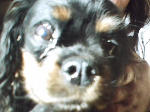 éros é& clarine mes 2² chien  :D