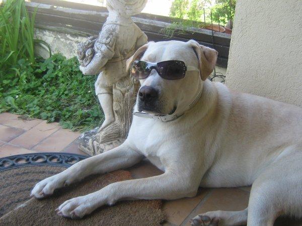 meii lunettes de soleil