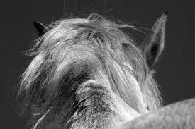 Encolure poney gris