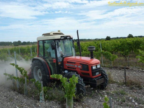 entretien des jeunes vignes 2010 ( 10 aout 2010 )