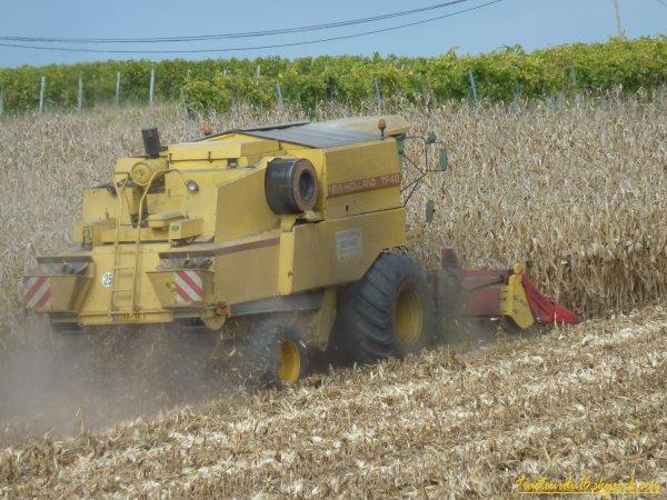 moisson de maïs ( 16 octobre 2010 )