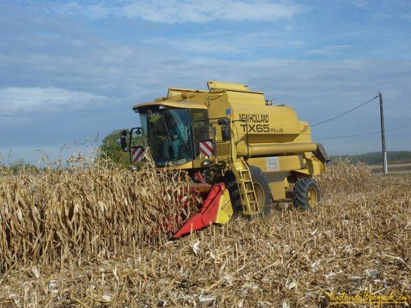 moisson de maïs ( 22 octobre 2010 )
