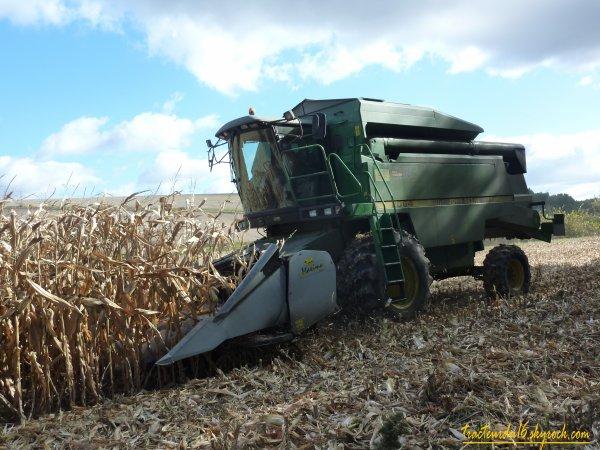 moisson de maïs ( 25 octobre 2010 )
