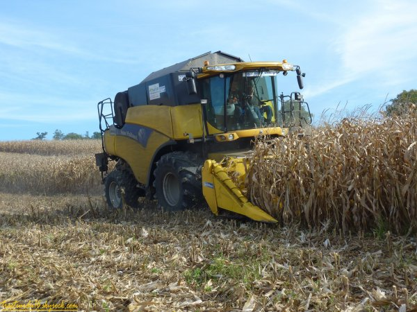 moisson de maïs 2010 ( 26 octobre 2010 )