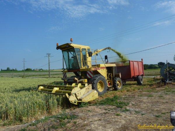 Ensilage de blé immature 2011 ( 03 juin 2011 )