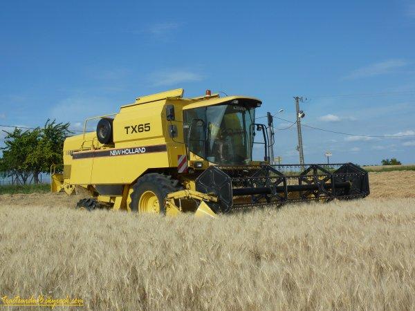 Moisson de blé dur 2011 ( 21 juin 2011 )