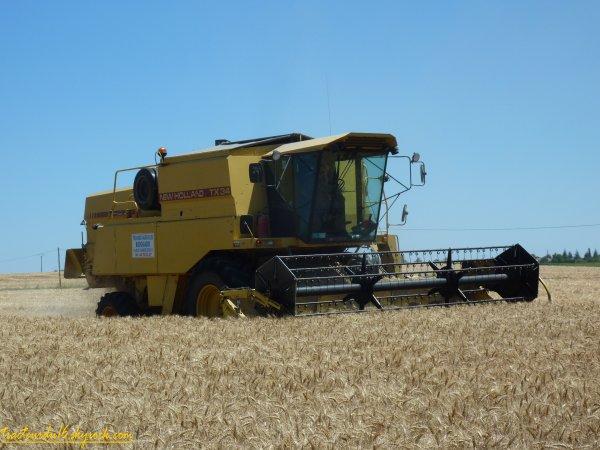 Moisson de blé tendre 2011 ( 29 et 30 juin 2011 )