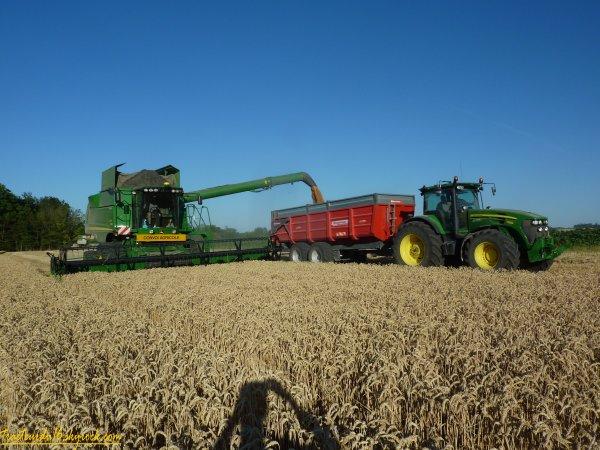 Moisson de blé tendre 2011 ( 02 juillet 2011 )