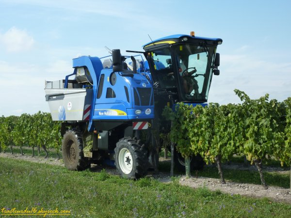Vendanges 2011 ( 10 septembre 2011 )