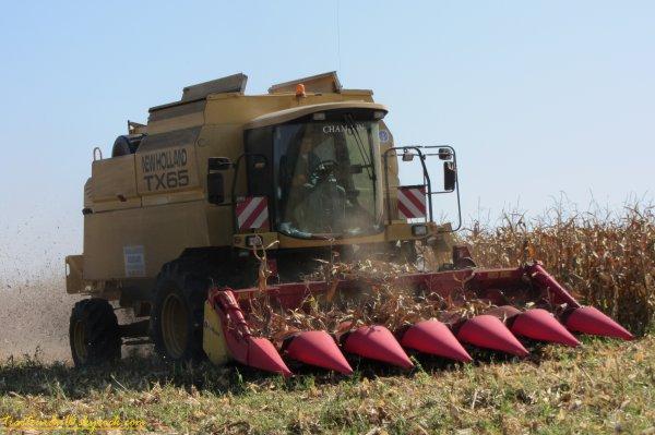 Moisson de maïs 2011 ( 28 septembre 2011 )