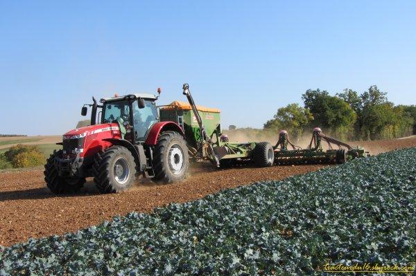 Semis et roulage de blé 2011 ( 16 octobre 2011 )