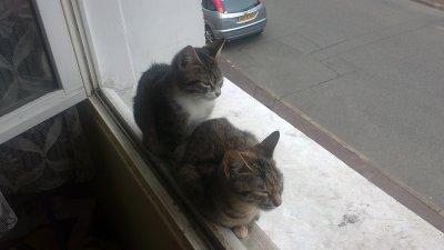 feline et chouquette